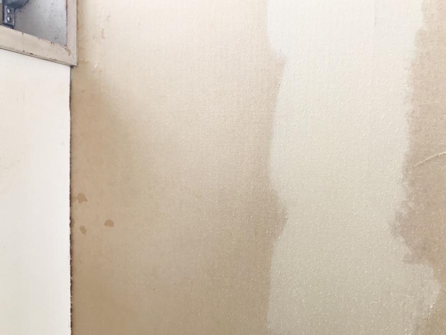 古い壁紙を剥がす 部屋の隅 壁紙 張り替え DIY セルフ リフォーム 猫のいる暮らし 初心者