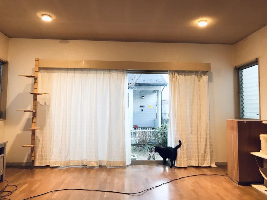 壁紙 張り替え DIY セルフ リフォーム 猫のいる暮らし 初心者