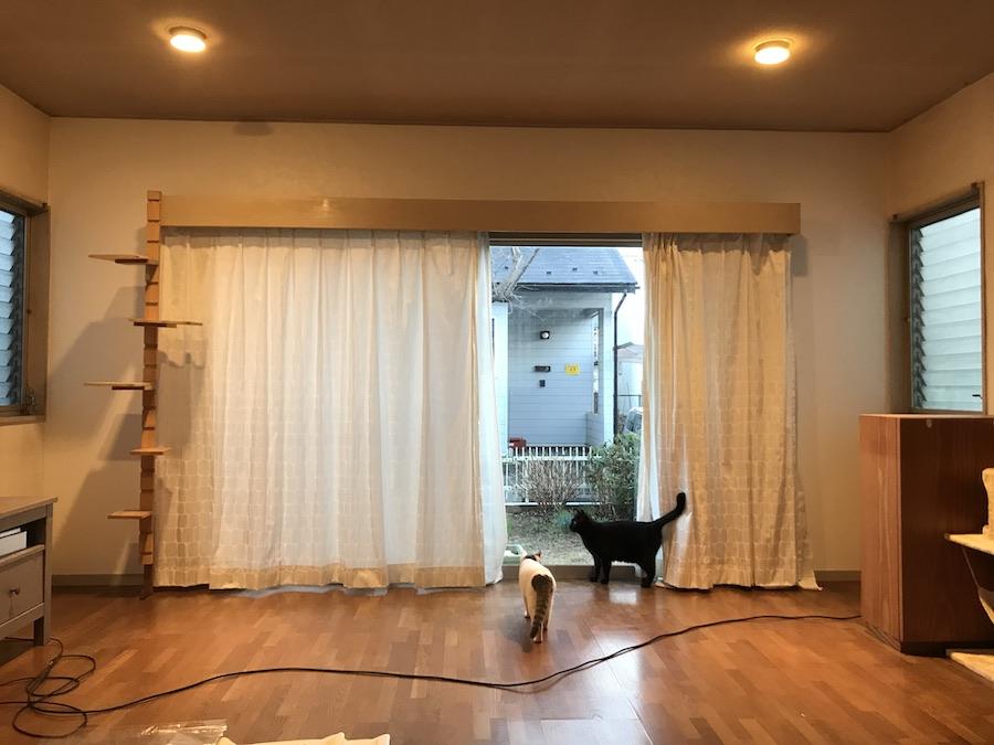 壁紙 張り替え DIY セルフ リフォーム 猫のいる暮らし 初心者 ねこつき一戸建て 築40年の戸建てDIYリノベーションと 猫との暮らし