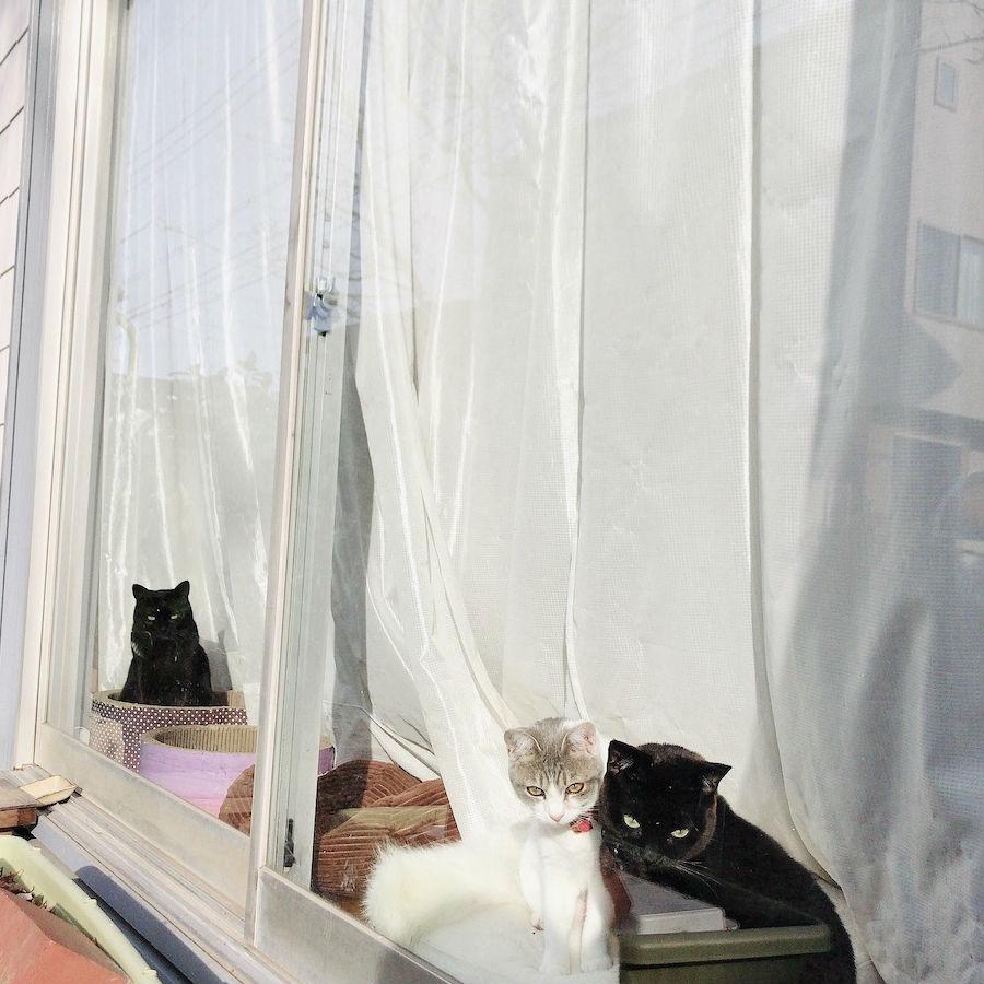 ねこつき一戸建て 築40年の戸建てDIYリノベーションと 猫との暮らし