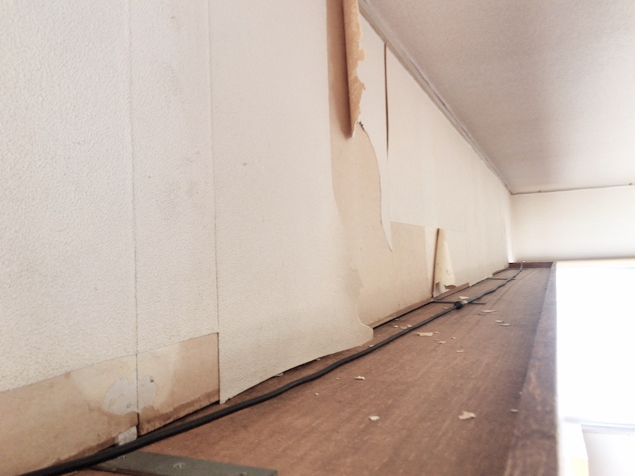 古い壁紙を剥がす 壁紙 張り替え DIY セルフ リフォーム 猫のいる暮らし 初心者