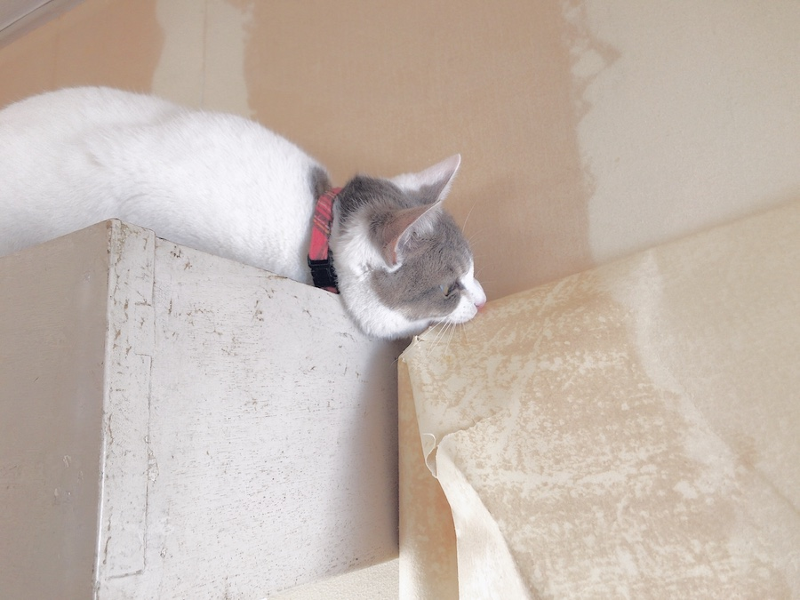 古い壁紙を剥がす ノミ 壁紙 張り替え DIY セルフ リフォーム 猫のいる暮らし 初心者 ねこつき一戸建て 築40年の戸建てDIYリノベーションと 猫との暮らし