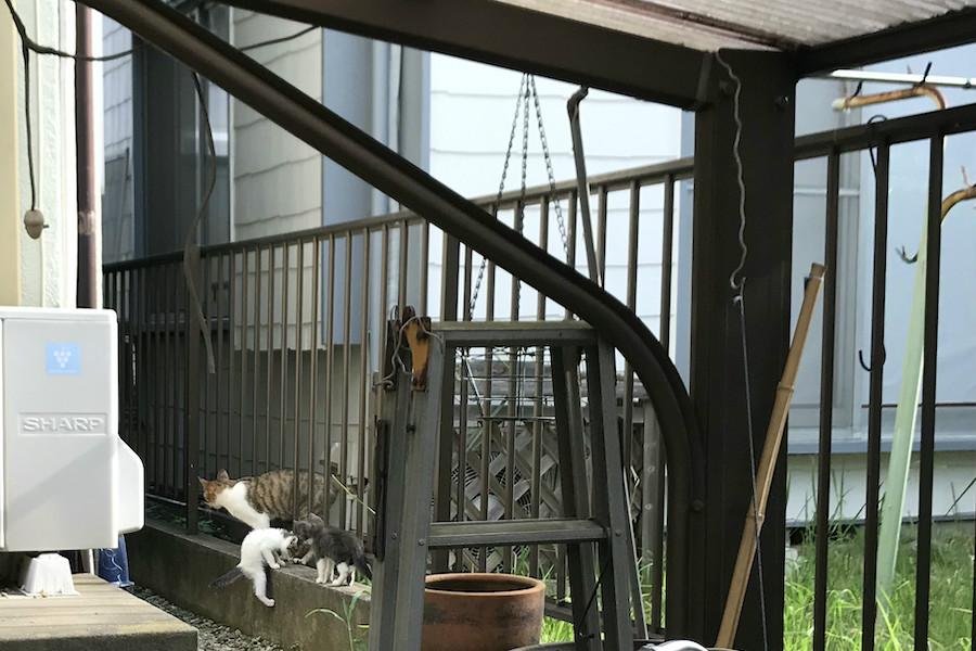 野良猫保護記録 地域猫