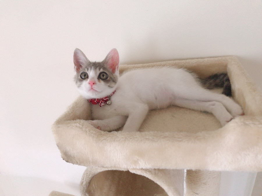 ねこつき一戸建て 野良猫を保護したらやっておくべき事