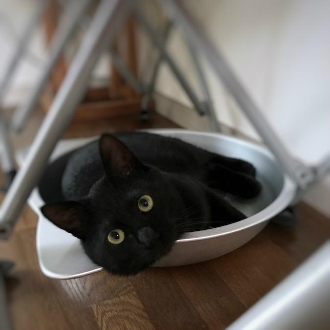 保護猫記録 猫を保護したら 必要なもの 猫を飼う準備 ねこつき一戸建て 築40年の戸建てDIYリノベーションと 猫との暮らし