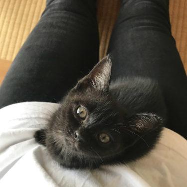 野良猫保護記録 「2匹目の猫を飼い始める」 気を付けた事と経験談