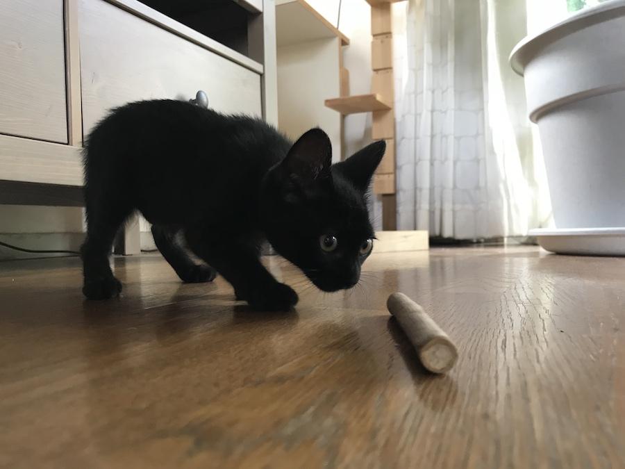 ねこつき一戸建て 野良猫 保護した時