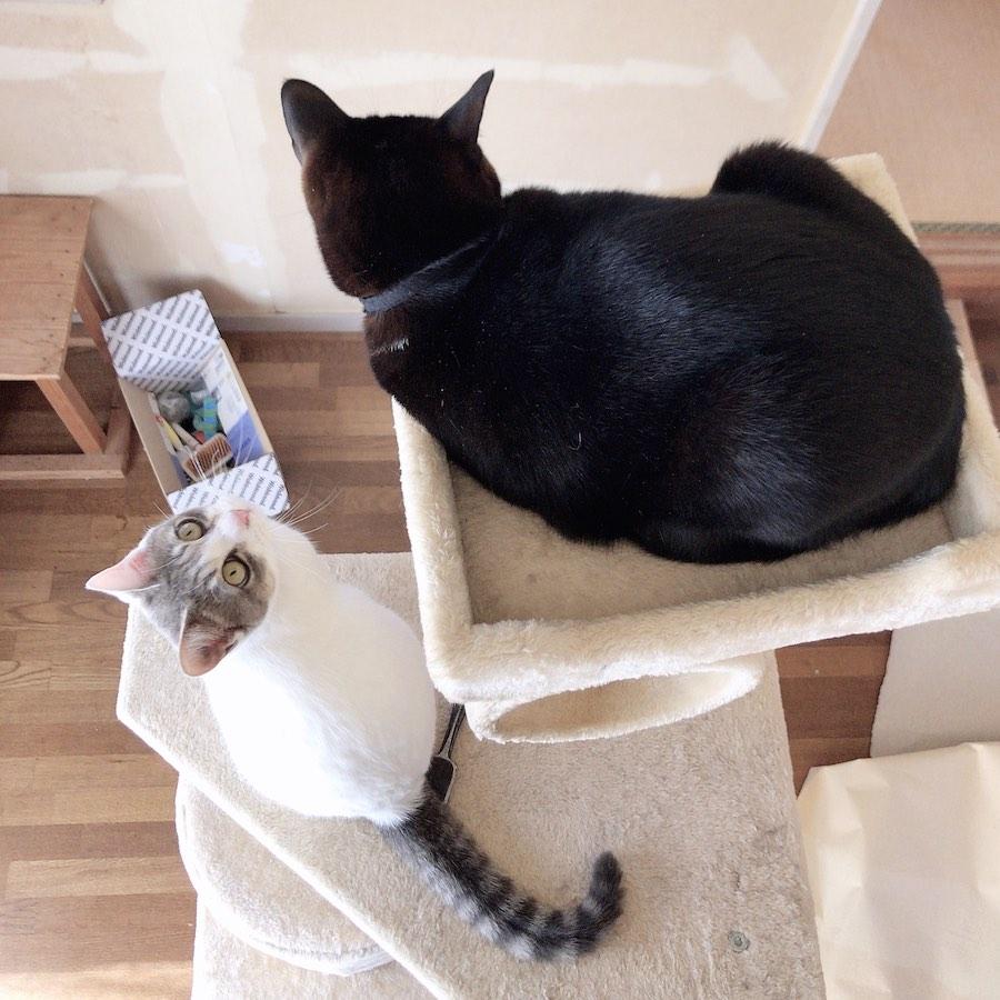 猫のいる暮らし 猫のいる生活 セルフリフォーム
