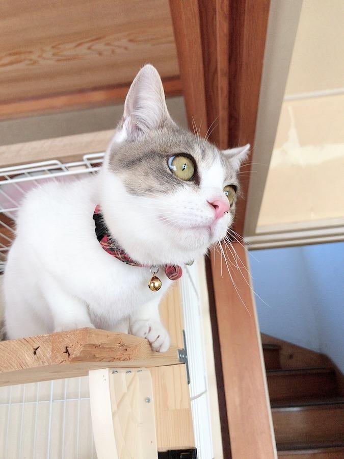 ねこつき一戸建て 猫のいる暮らし 猫のいる生活 セルフリフォーム