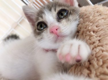 野良猫保護記録 多頭飼い猫「3匹目の猫を飼い始める」 体験談