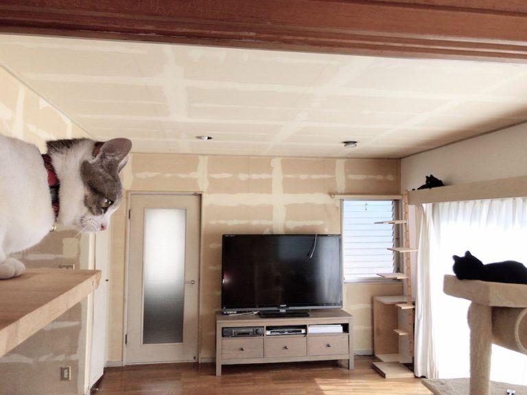 ねこつき一戸建て 猫のいる暮らし 壁紙張り替え DIY セルフリフォーム ビフォーアフター