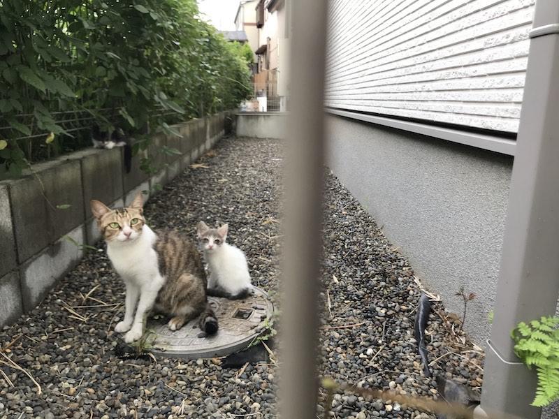 野良猫を保護したい