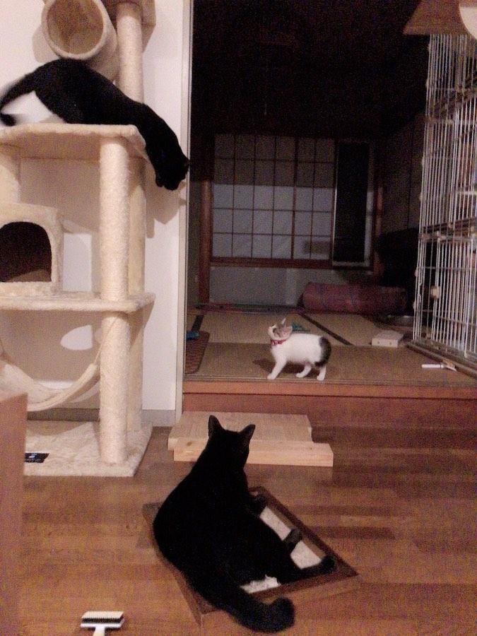 多頭飼い 猫 子猫を保護したら