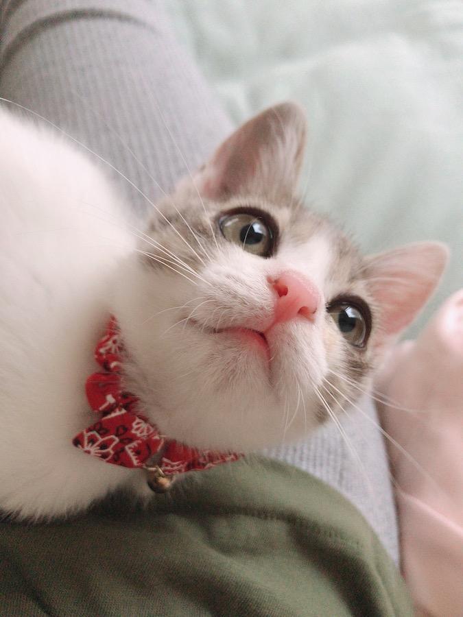 ねこつき一戸建て 猫が好き 猫は癒し 猫がいるだけで幸せ