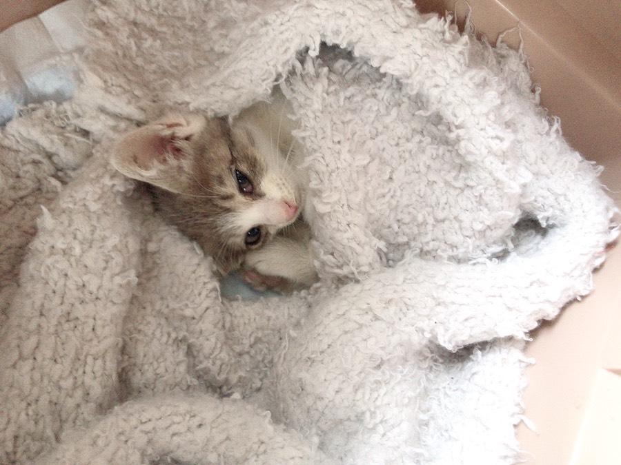 ねこつき一戸建て 野良猫保護記録 子猫を保護した時