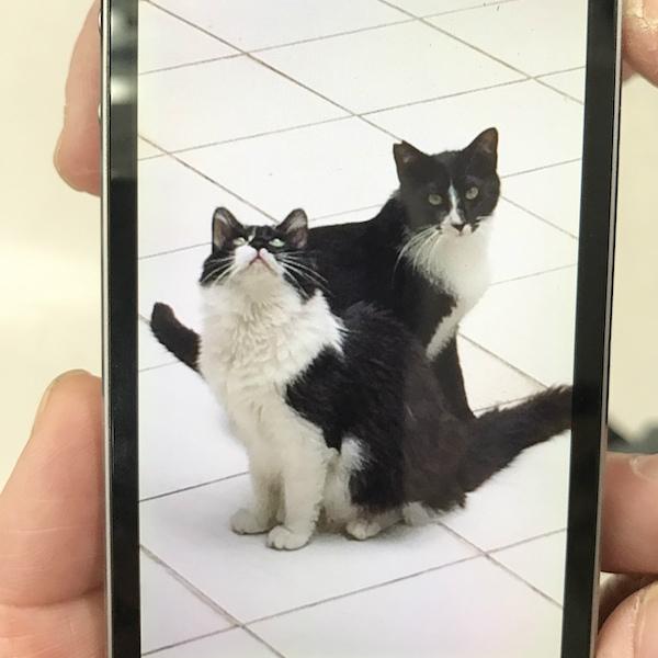 保護猫 黒猫 猫を保護したら 必要なもの 猫を飼う準備