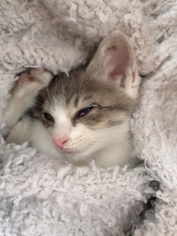 ねこ野良猫保護記録 子猫を保護した時