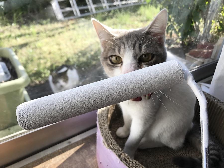 ねこつき一戸建て 猫との暮らし 幸せな毎日