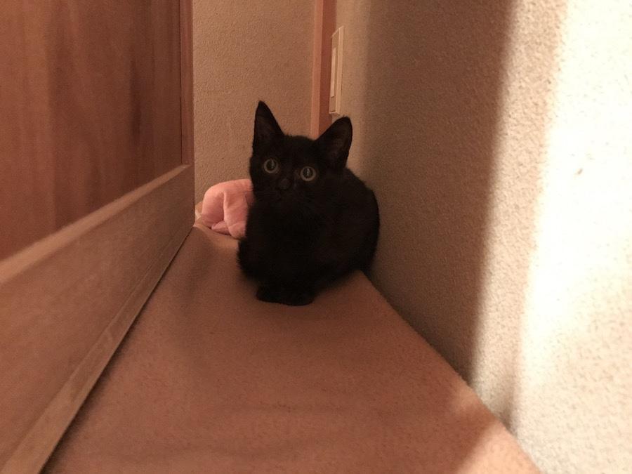 保護猫記録 猫を保護したら 必要なもの 猫を飼う準備
