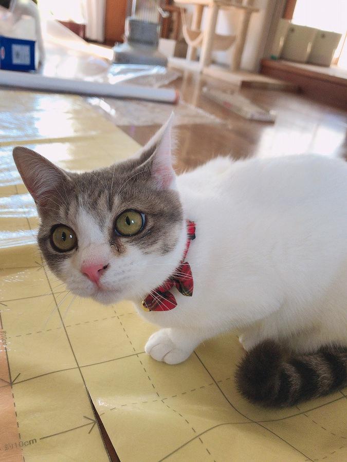 猫のいる暮らし DIY セルフリフォーム