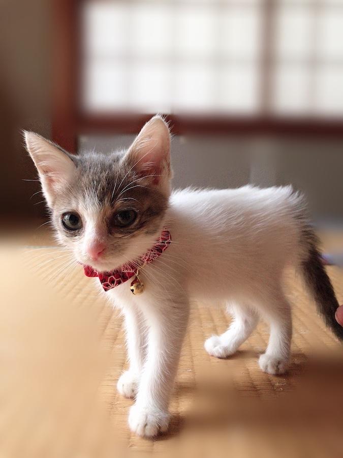 ねこつき一戸建て 子猫を保護した時 野良猫保護