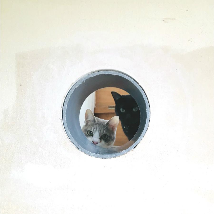 ねこつき一戸建て,猫トンネルの作り方,DIY女子,猫との暮らし,壁に穴をあける方法,セルフリフォーム