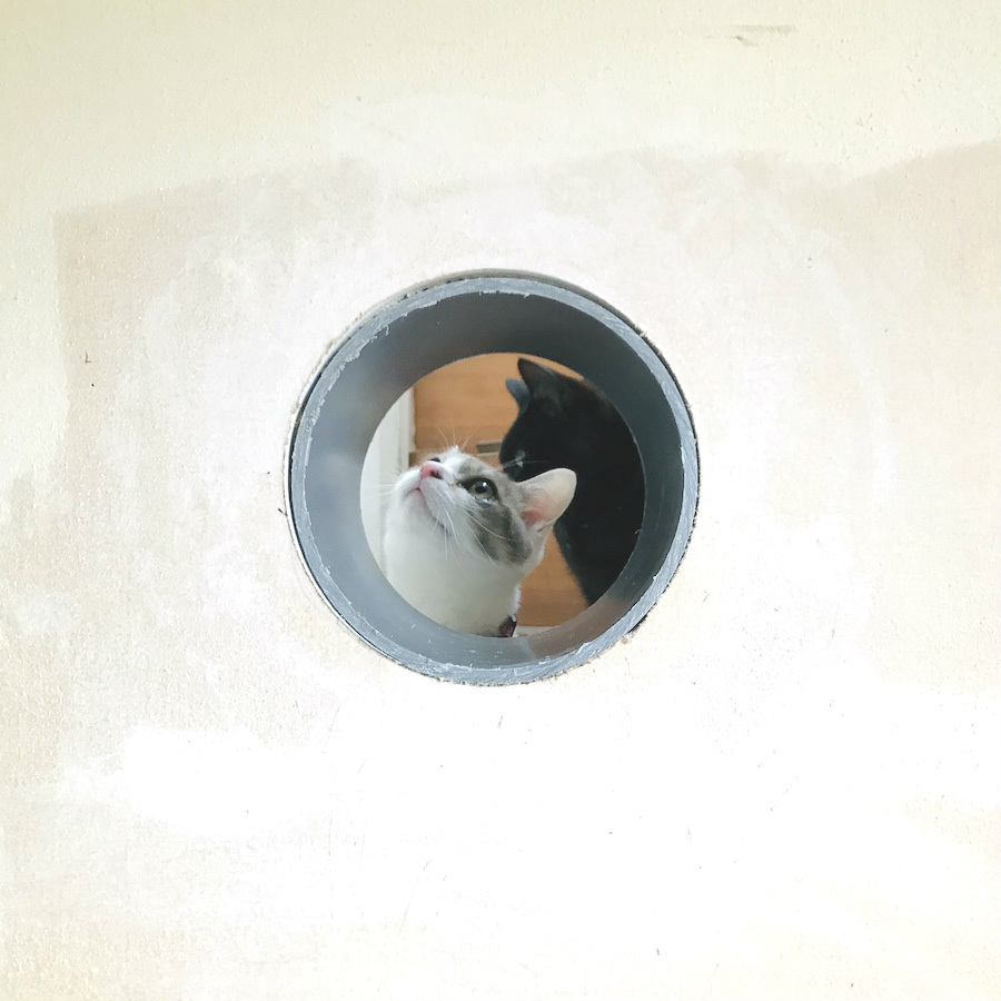 ねこつき一戸建て,猫トンネルの作り方,DIY女子,猫との暮らし,石膏ボード 壁に穴をあける方法,セルフリフォーム