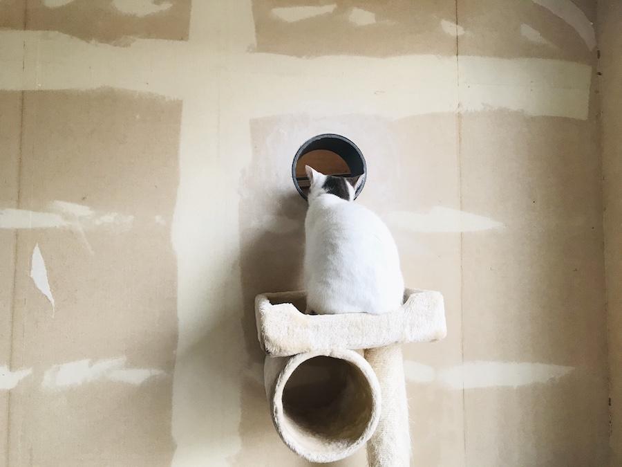 ねこつき一戸建て,猫トンネルの作り方,DIY女子,猫との暮らし,壁に穴をあける方法,DIY女子,セルフリノベーション