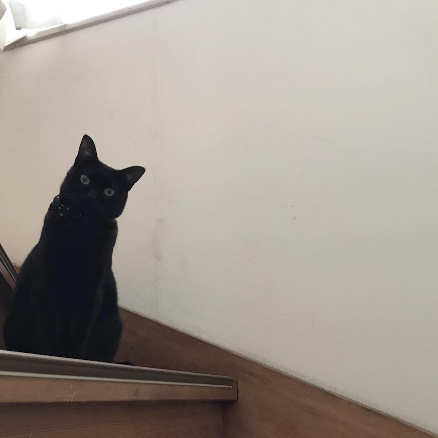 黒猫 保護猫
