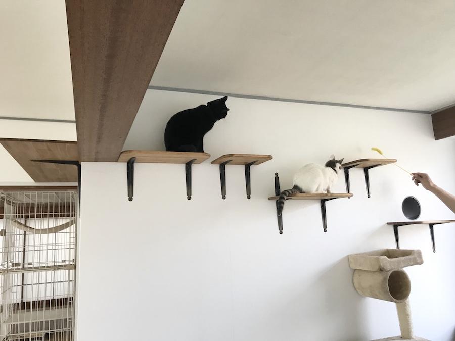 キャットウォーク作り方 DIY キャットステップ 野良猫保護