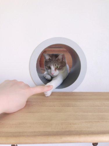 猫トンネルにフチを付けて本当の完成形 猫の抜け穴の作り方