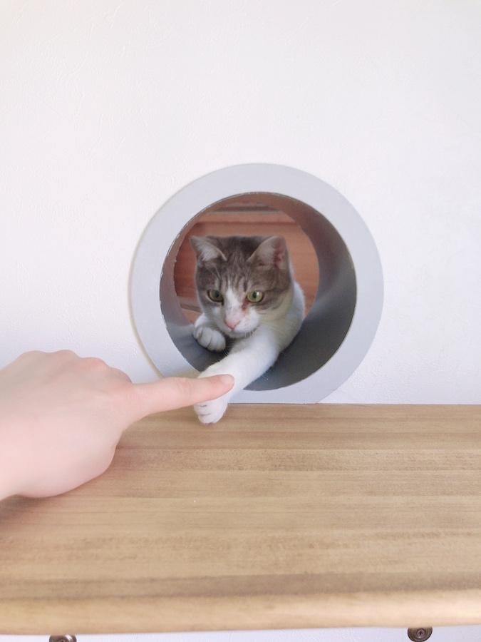 ねこつき一戸建て 猫との暮らし 猫トンネル 自作 DIY