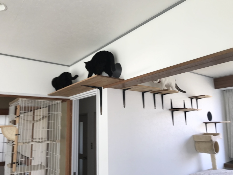 野良猫保護 多頭飼猫 キャットウォーク 作り方 DIY