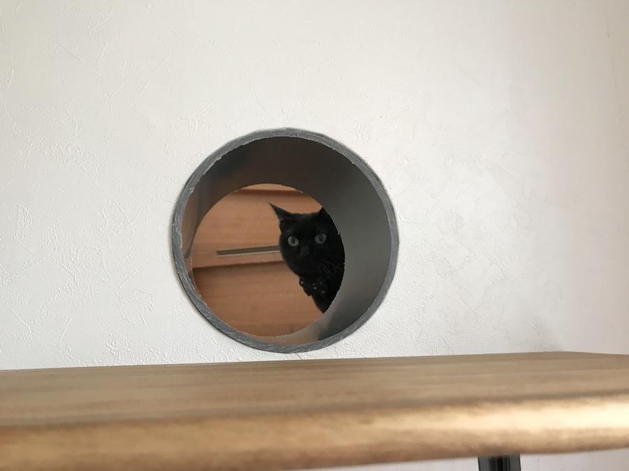 猫トンネル 覗く猫 猫との暮らし おうち時間