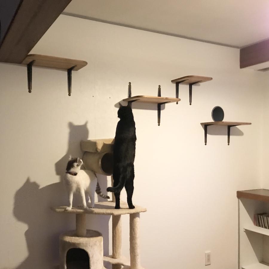 二足で立つ猫 ねこつき一戸建て 猫の居る生活 猫との暮らし おうち時間
