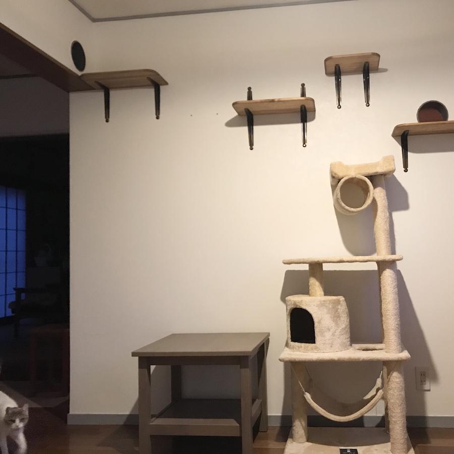 キャットウォーク 自作 作り方 猫のいる暮らし