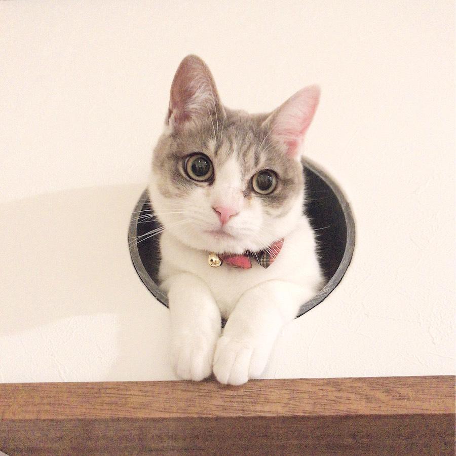 ねこつき一戸建て ネコトンネル 多頭飼い猫 猫との暮らし