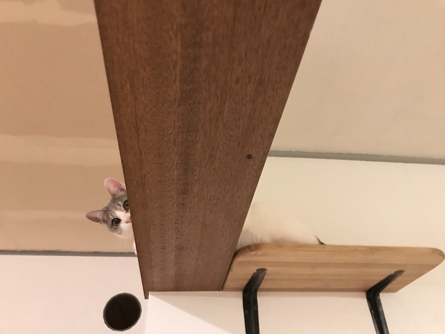 保護猫 キャットウォーク