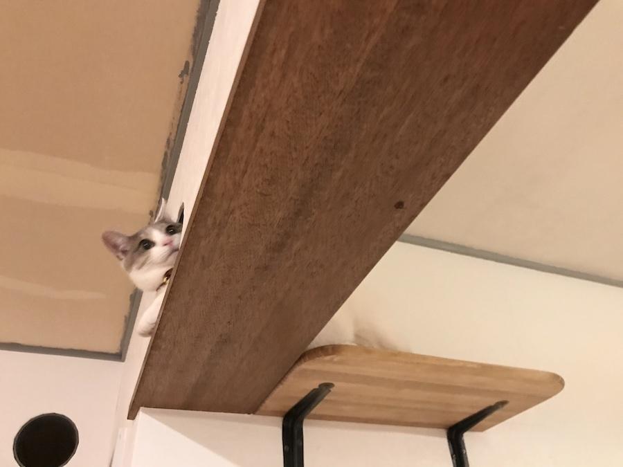 保護猫 猫トンネル