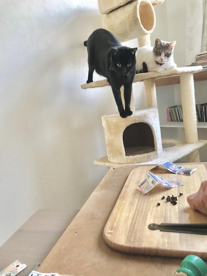 キャットウォーク DIY 猫との暮らし 自作キャットウォーク キャットウォークの作り方