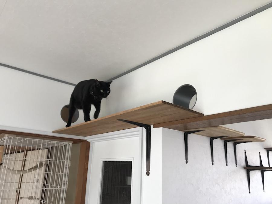野良猫保護 多頭飼猫 猫は高いところが好き