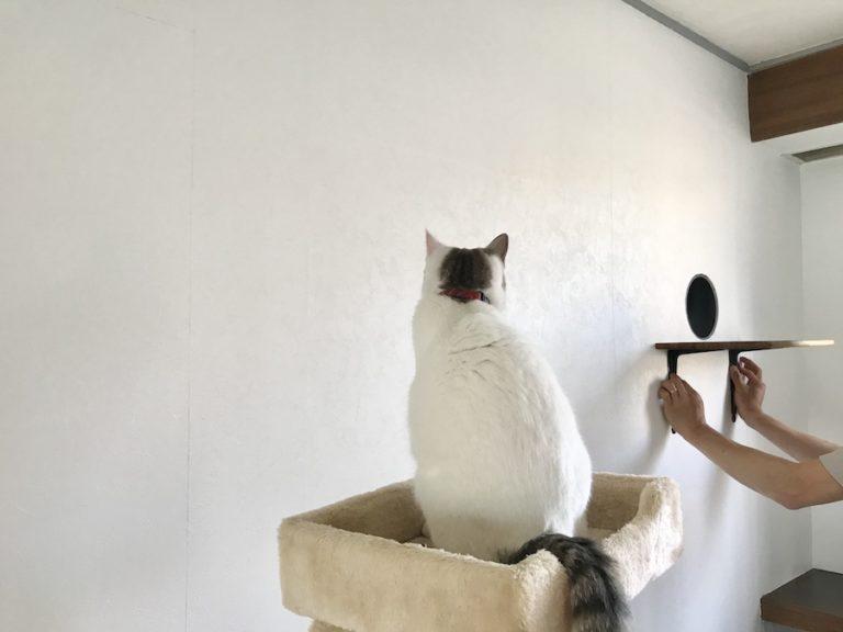 猫の居る生活 おうち時間 DIY セルフリフォーム