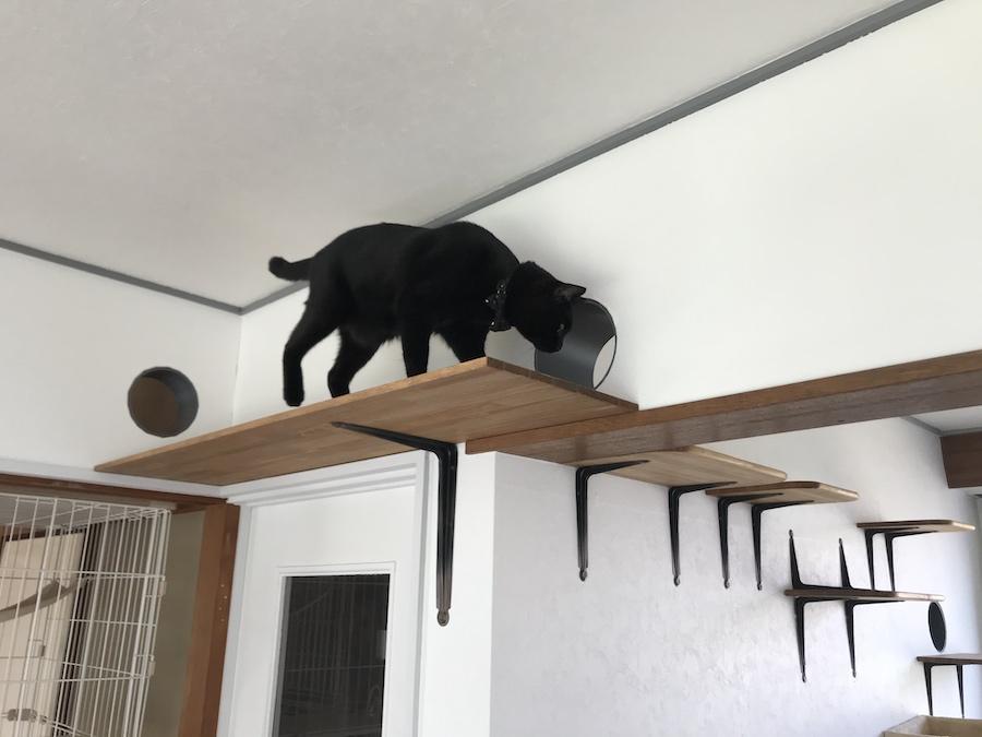 野良猫保護 多頭飼猫 キャットウォーク キャットステップ