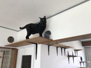 猫ちゃん大喜び DIYで作る壁面 キャットウォーク開通