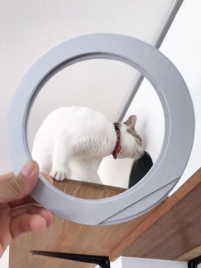 猫との暮らし 猫トンネル 自作 DIY