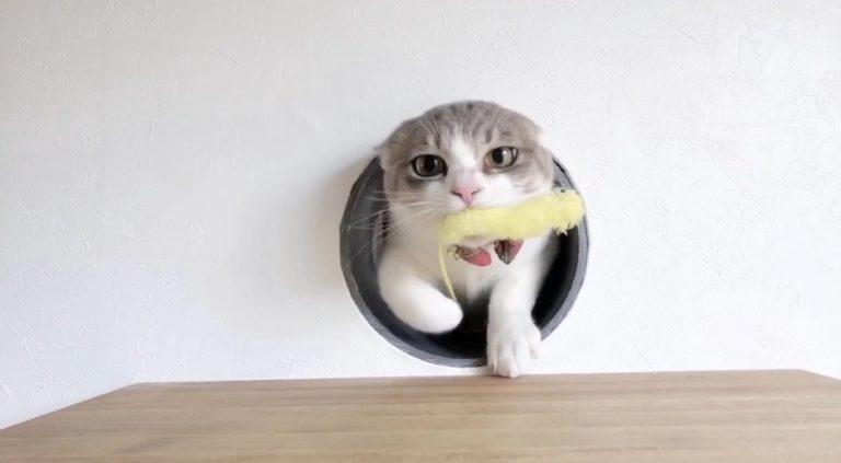 ねこつき一戸建て 猫じゃらし おもちゃ 好きすぎる ネコとの暮らし 多頭猫
