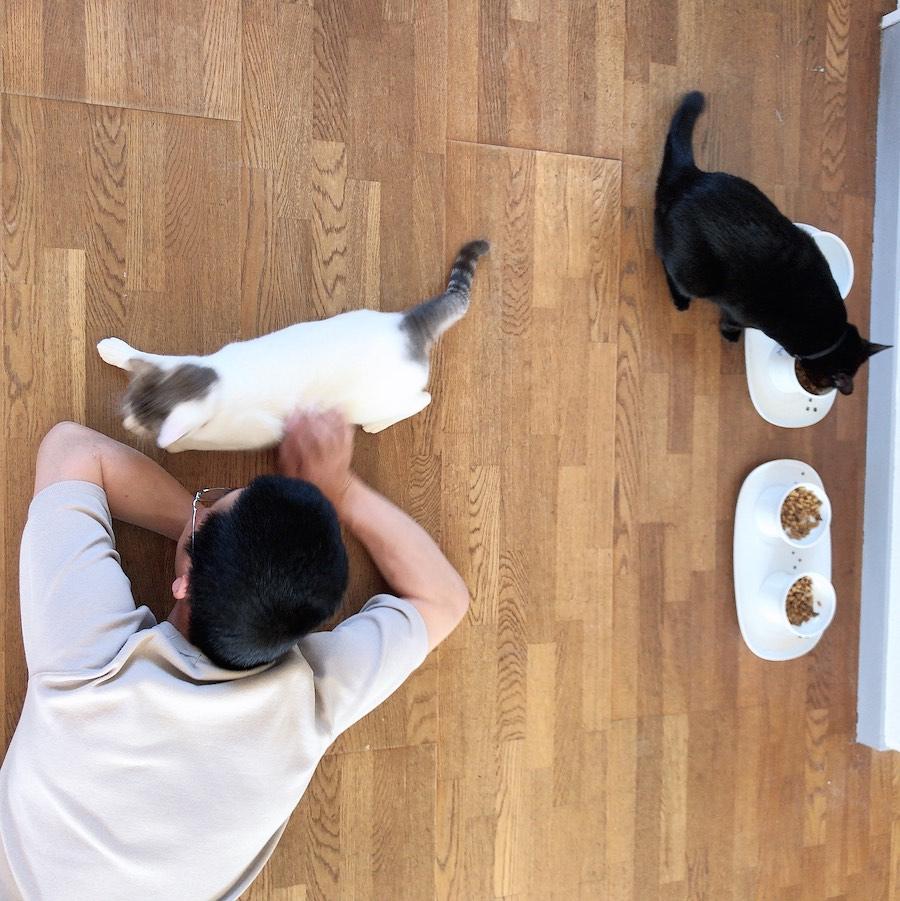 猫 食事 回数 量 多頭飼 3匹 吐き戻し対策