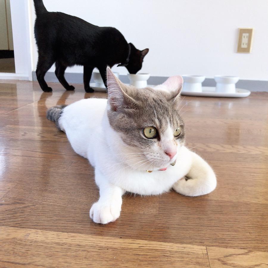 保護猫 食事 吐き戻し対策 多頭飼