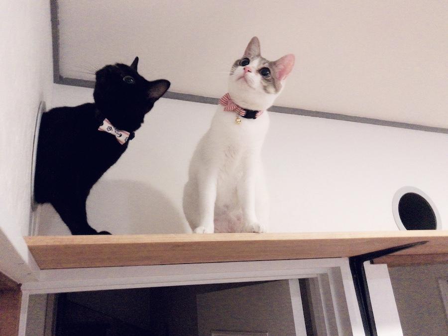 ねこつき一戸建て 保護猫 多頭飼 食事