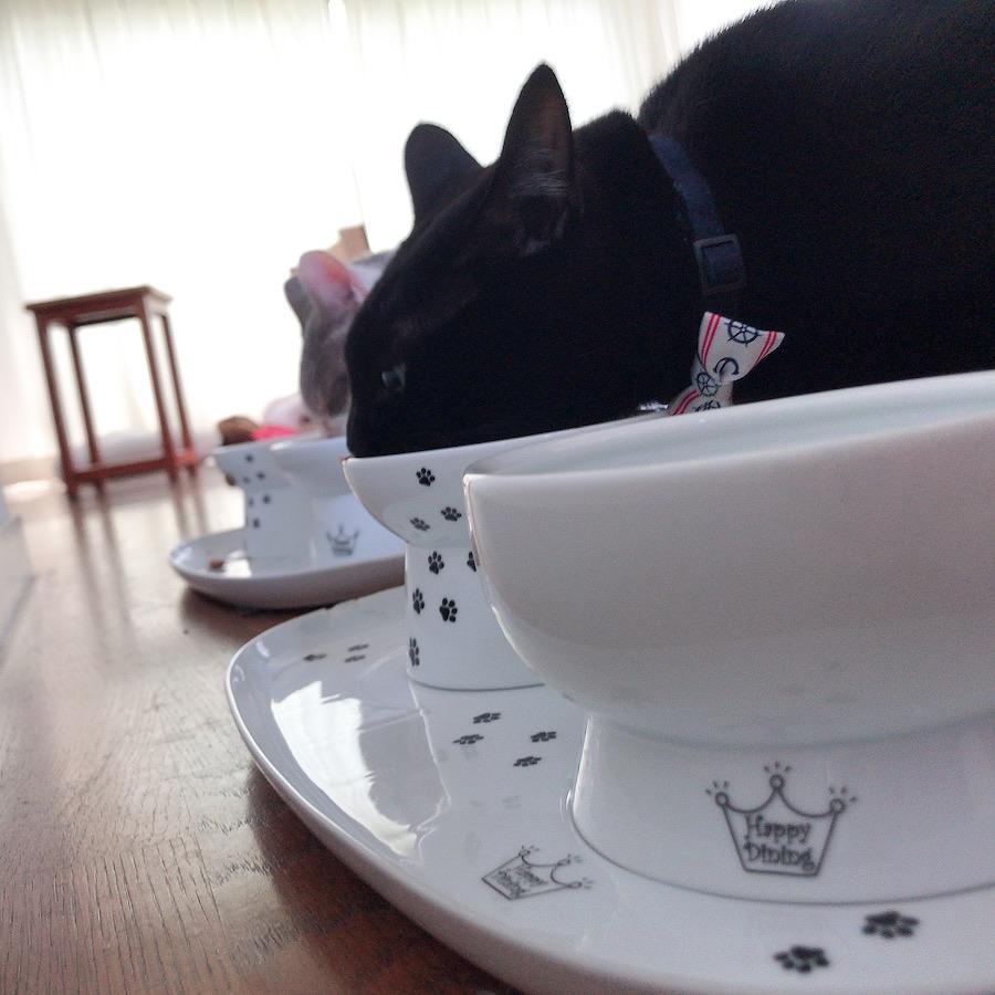 猫の食欲回復 ウェットフード 夏バテ対策